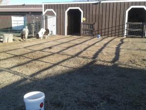 SE corner of barnyard