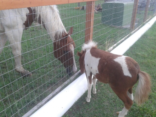 Jaxx with neighbor horse